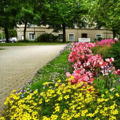 Puisto asuinalueella