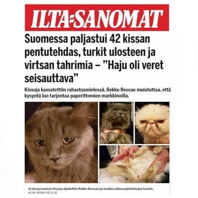 Faximil av Ilta-Sanomats artikel om kattfabriken