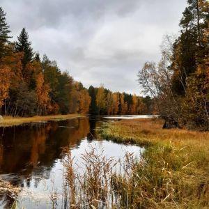 Färggranna träd vid vatten fotograferade på Iskmo-Jungsund vandringsled.