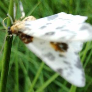 En lite suddig bild på vit fjäril.