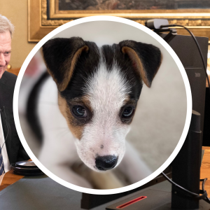 Presidentparet (Sauli Niinistö och Jenni Haukio) sitter vid en dator och ler. I en boll syns deras nya hundvalp Osku.