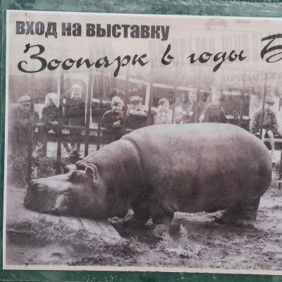 Virtahepo Krasavitsa Leningradin eläintarhan piiritysmuseon kyltissä.