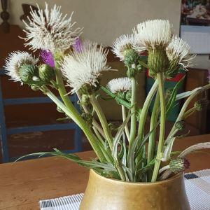 En vas med lila och vita brudborstar.