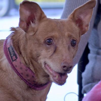 Podencorotuinen Pippa-koira