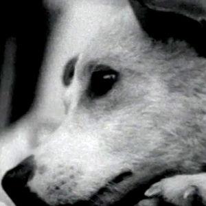Neuvostoliittolainen avaruuskoira (1960).