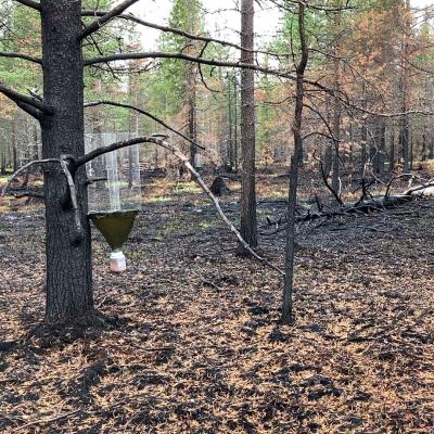 Sodankylän Kaitamaalla tehdään hyöntesikartoituksia.