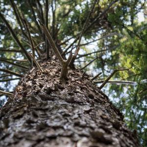 Puut kurottautuvat kohti valoa