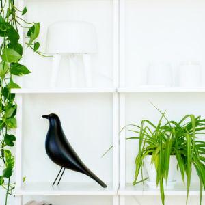 Tämä yksi hylly on Miia Salmen kodin sisustuselementti. Siinä on kukkia ja usein myös yksi sisustuskynttilä.