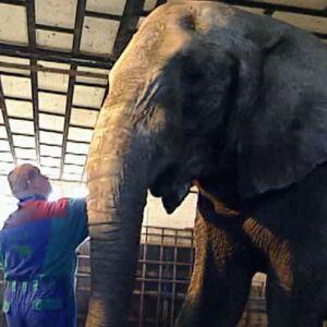 Vanni-norsu hoitajineen Zoolandiassa 2005.