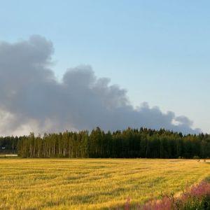 Kalajoen maastopalosta leviää sankka savu, joka näkyy pitkienkin matkojen päähän. Palosta lähtevä savupatsas kuvattuna 28.7.