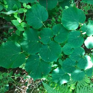Gröna blad.