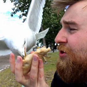 En fiskmås nappar en karelsk pirog ur en skäggig mans hand.