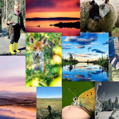 Kuvakooste huippuhetkistä Suomen luonnossa 2021