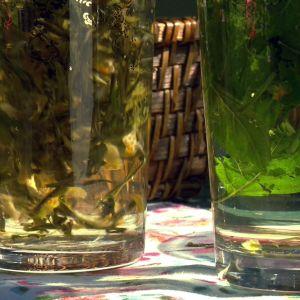Alexandra gör två sorters te av citronskal