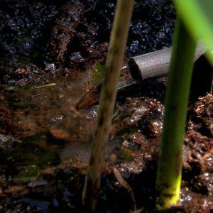 Bevattningssystemet gör att jorden bibehåller sin fuktighet