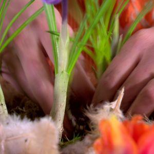 Elin planterar om liljor.