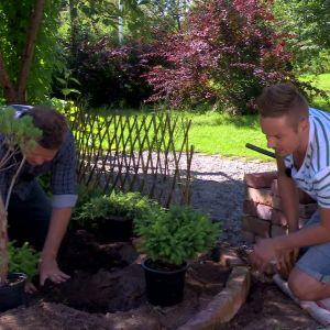 Barrväxter trivs i fukt och skugga.