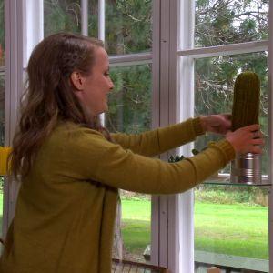 Stickad kaktus på fönsterbrädet