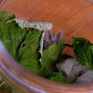 Hallonblad och gurkört i burk