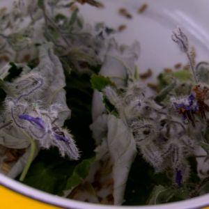 Frön och torkade blad i kastrull.