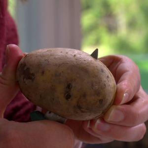 Klyv potatisen på längden.