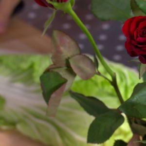 Kinakål och ros som inspiration.