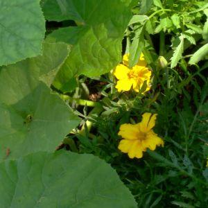 sammetstagets i nyckelhålsträdgården