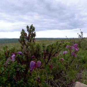 landskap i Lappland