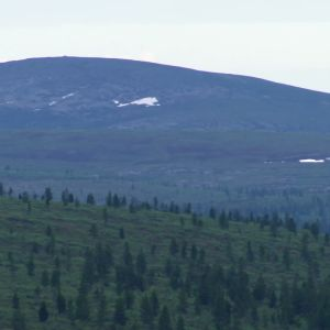 kalfjäll i Lappland