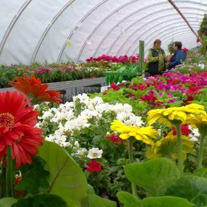 blommor i växthus