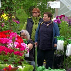 kvinnor i ett växthus med blommor