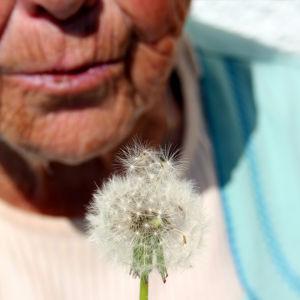 vanha nainen puhaltaa voikukan haituvia ilmaan