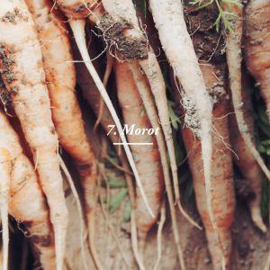 vad innehåller morötter