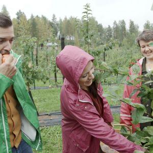 Filip och Linda smakar på östnyländska äpplen.