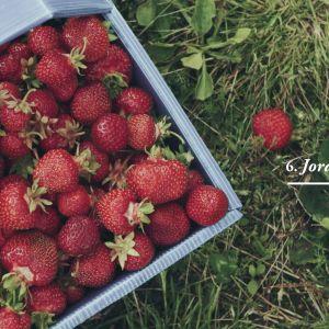 Jordgubbar i en plastkorg