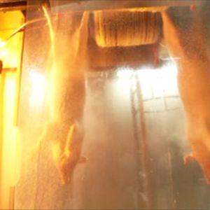Possun karvat poltetaan