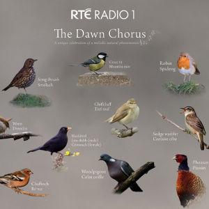 Kuvassa on kymmenen lintua nimettynä enganniksi ja irlannin kielellä.