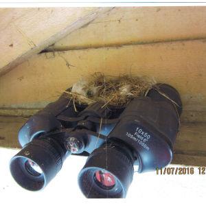Ett fågelbo byggt ovanpå en kikare