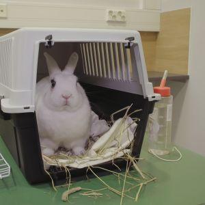 Kani kantokopassa eläinlääkäriaseman hoitopöydällä