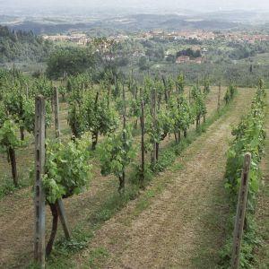 Viiniviljelmiä italiassa