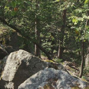 Bergsklippor i solig blandskog.