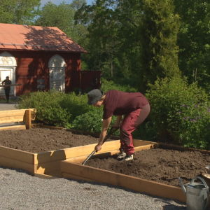 Elin Skagersten-Ström Arbetar i Strömsös trädgård