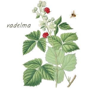 vadelma