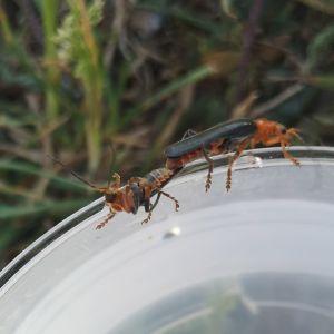 Två insekter som verkar para sig på kanten av ett glas.