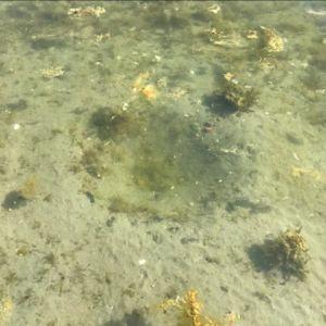 En grop i sandig botten på 20 cm djup.