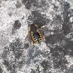 En insekt på grå sten.