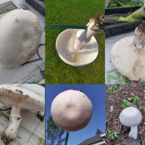 Sex stycken bilder på vit svamp