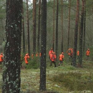 Vargjägarna i Virmo hade problem med snön som smälte bort i februari.