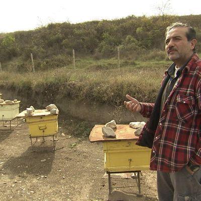 Hovik Asmaryan mehiläislaatikoiden luona