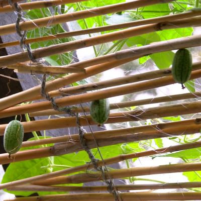 vassgardin i växthustak